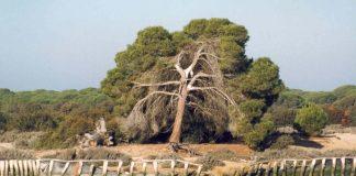 El incendio afectó al parque nacional de Doñana. Imagen de archivo.