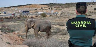 Un camión con elefantes volcó en la A-30. Última hora.