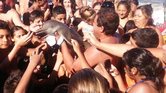 Muere un delfín en una playa en Santa Teresita, en Argentina