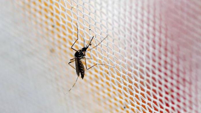 El virus Zika llega a China