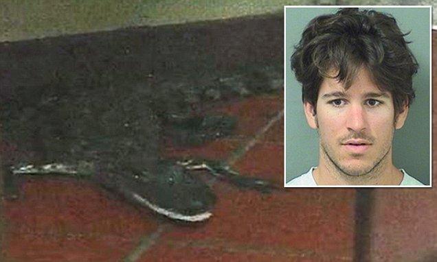 Joshua James arrojó un cocodrilo por la ventana de un drive-thru de un Wendy´s