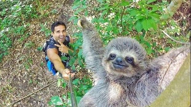 perezoso-palo-selfie-kQeG--620x349@abc