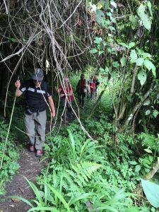 Caminando por la Seva Amazónica
