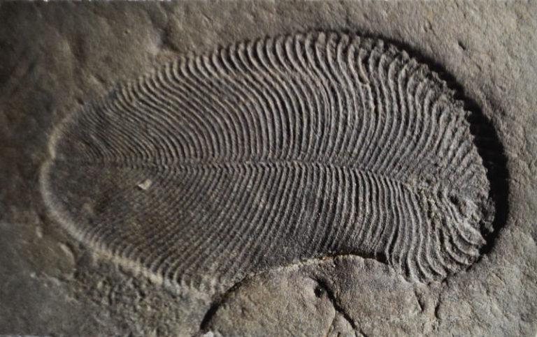 Dickinsonia el animal mas antiguo del planeta que no tenia ojos